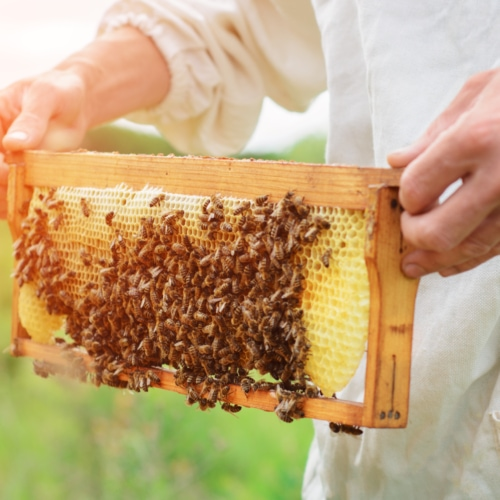 Aus dem Bienenstock